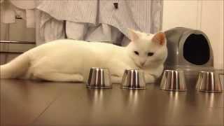 Game | Chú mèo thông minh | Chu meo thong minh