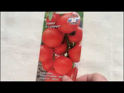 Помидорное дерево!! томат Спрут F1- один из самых необычных сортов... А стоит ли его сажать??