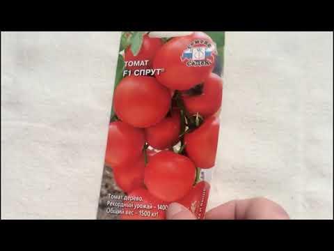 Помидорное дерево!! томат Спрут F1один из самых необычных сортов... А стоит ли его сажать??