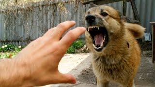 Собаки напали на хозяина(, 2016-01-12T17:08:51.000Z)