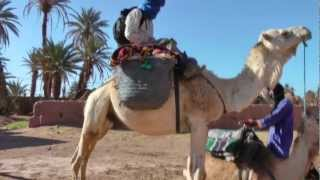 Camel Trek in the Sahara, Morocco