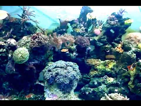 Resultado de imagen de corales y peces