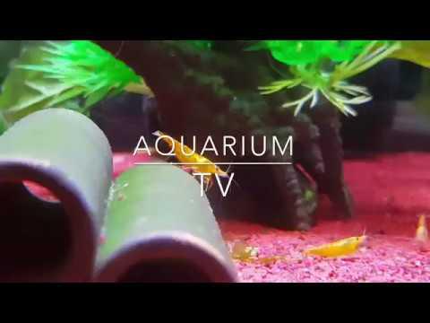 10 Einfach Zu Haltende Fische Fur Anfanger Youtube