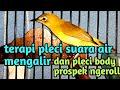Terapi Pleci Suara Air Mengalir Dan Pleci Ngerol Suara Burung  Mp3 - Mp4 Download
