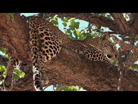 Zambia South Luangwa 1