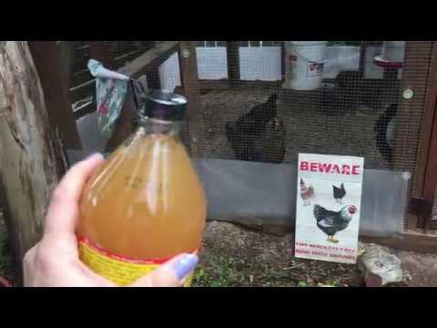 apple-cider-vinegar-(acv)-and-your-backyard-chickens