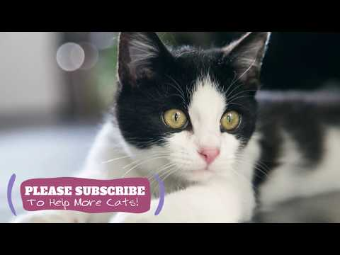 Magic Cat Music - 2 Hours Soothing Music for Pet Cats! ☯LCZ130