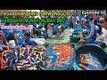 Pasar Ikan Hias Purwonegoro Di Banjarnegara Jawa Tengah Harganya Murah Murah Bro  Mp3 - Mp4 Download
