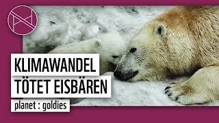 Die letzten Eisbären! Wenn wir jetzt nichts tun werden sie sterben!
