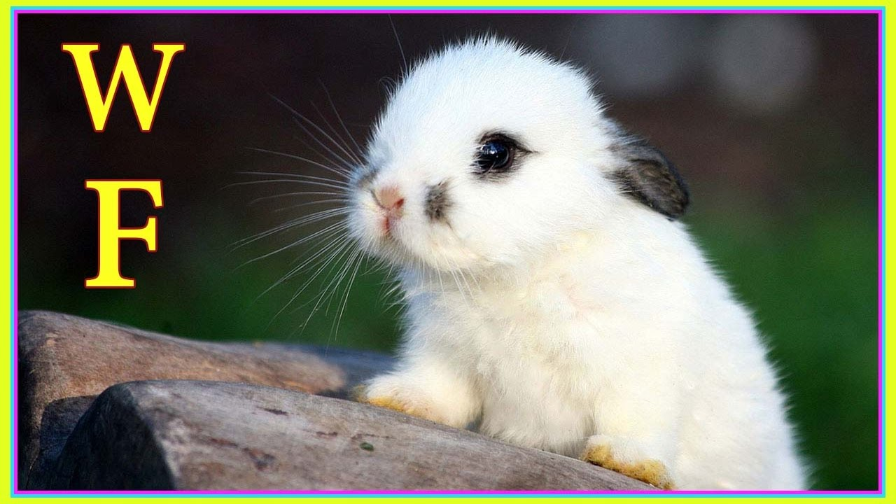 very cute bunnies new cute bunny compilation youtube