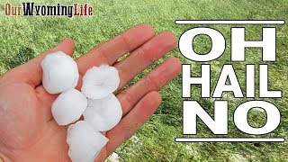 hail-storm-destroys-hay-and-changes-the-ranch-plan