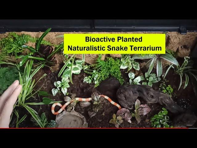 Στήσιμο τερραριουμ φιδιού Bioactive Naturalistic Part B | Feeders Strs 79