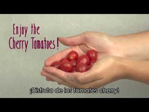 Farm to School: Cherry Tomatoes