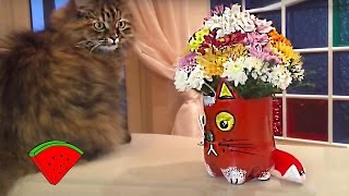 ДЕКОР: ваза в форме кота *** Decor: CAT - flower vase (DIY)