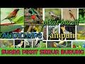Suara Pikat Semua Jenis Burung Part  Mp3 - Mp4 Download