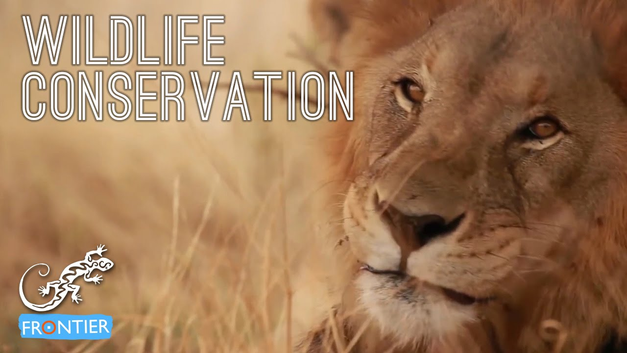 conservation of wildlife Conservation in africa, as elsewhere, involves decisions about the allocation and use of resources, including scarce ones, and, as such, tends to be highly politicized many human activities have had a conservation effect while serving a different primary purpose respecting sacred areas can create.