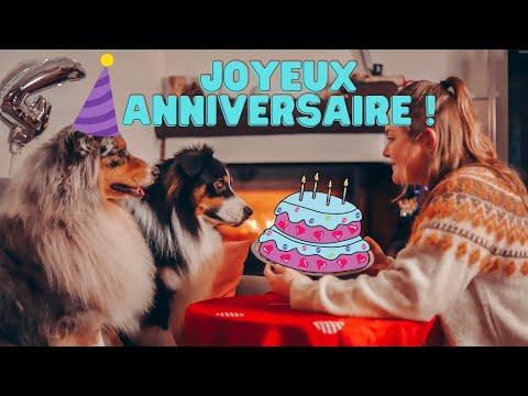 je-fais-un-gateau-d'anniversaire-pour-mon-chien-(encore-des-bêtises)-♡