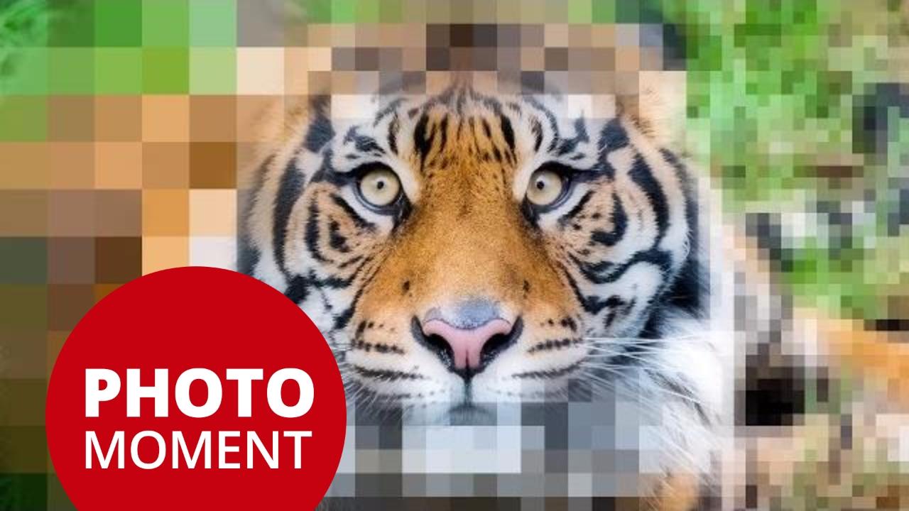 Understanding Resolution; PPI, DPI for Print and Digital   PhotoJoseph's Photo Moment 2017-02-28