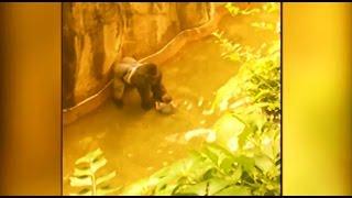 Boy falls into Gorilla World exhibit at Cincinnati Zoo