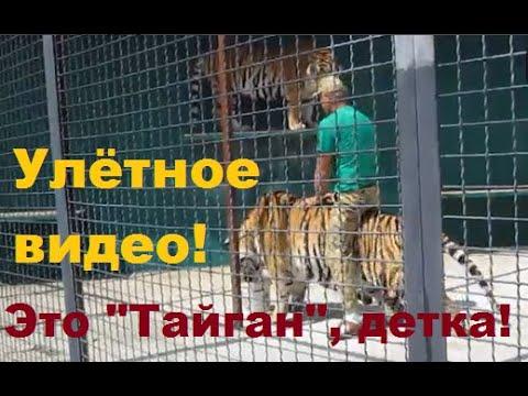 Бесподобное видео! Олег Зубков в клетке с тиграми!
