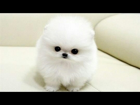 Top 50 cutest and cuddliest pets-that can melt you off!