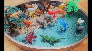 Learn the names of animals at the beach with dolphin and farm animals ... forest animals for kids