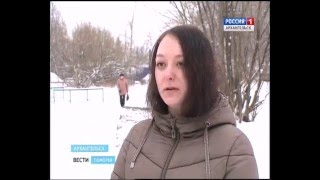 На втором Лесозаводе в Архангельске бродит стая бездомных собак