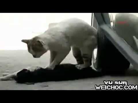 кошка умерлаадругая хотела помочь
