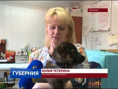 В Иванове из окна 5 этажа выбросили собаку