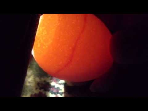 Image result for red ring of death chicken eggs