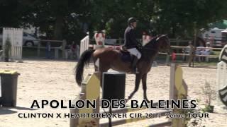 APOLLON DES BALEINES CIR 2014