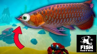 ¡NO TE METAS EN EL AGUA SI VES ESTE PEZ! - Feed and Grow: Fish (Survival Simulation Game)