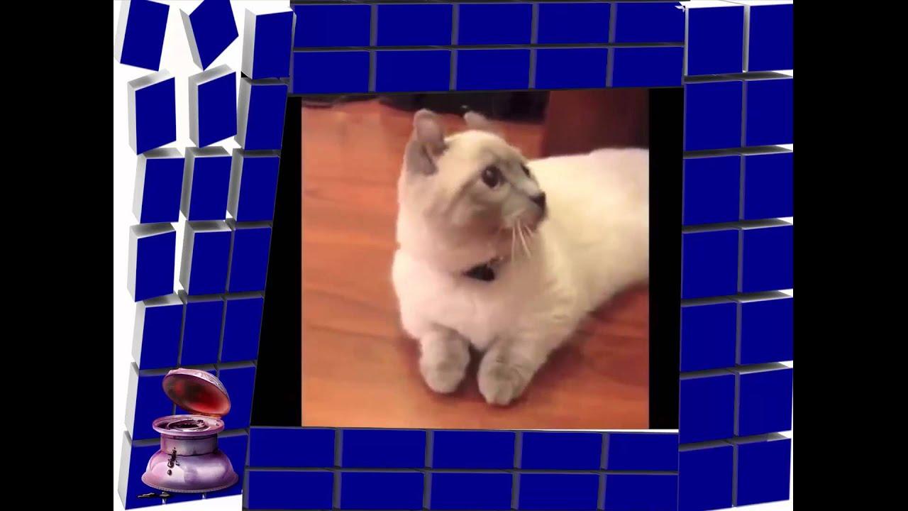 midget cat best vines of midget cat compilation youtube