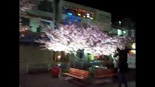 Цветущая сакура!(Смотрите также другие видео и статьи о Японии на моем блоге http://polosochkina.ru/razdely-bloga/japan., 2014-03-23T09:52:53.000Z)
