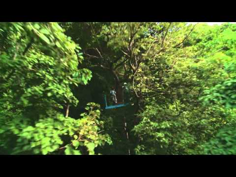 Antigua Rainforest Zipline Canopy Adventure - Island Routes