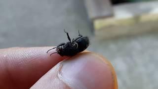 Как паук ест муху? Праздник желудка у паука.