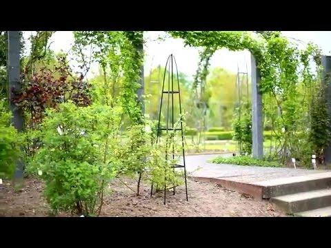 Fioriera per piante rampicanti in giardino fai da te youtube for Laghetto per anatre fai da te