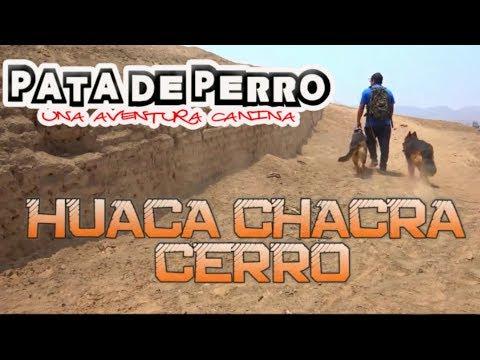 Huaca chacra cerro - Pata de perro una aventura canina