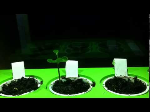 Time lapse – Oranges and Lemons growing in Click and Grow Smart Herb Garden