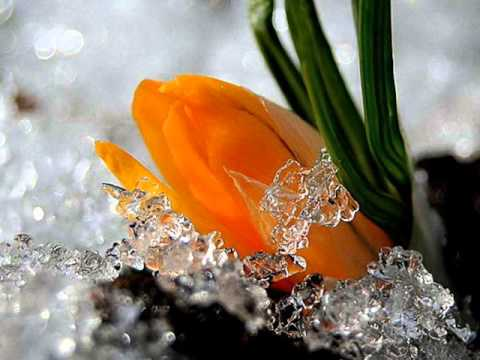 Под цветы тюмень