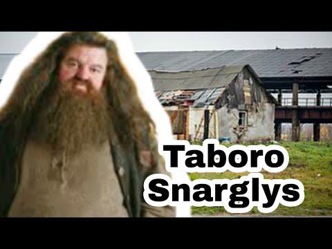Haris Narkoteris Ir Taboro Snarglys