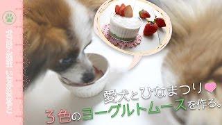 【レッスン情報】http://www.inugohan-official.com/#!lesson/c161y 【...