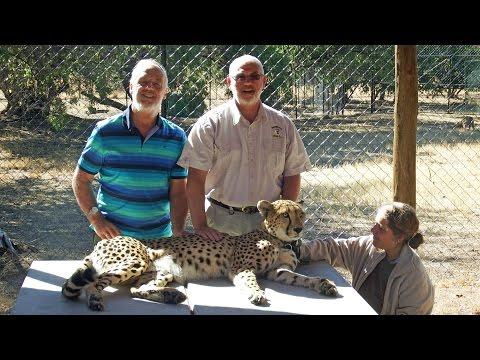 South Africa 2015:    De Wildt / Shingwedzi Cheetah and Wildlife Ranch