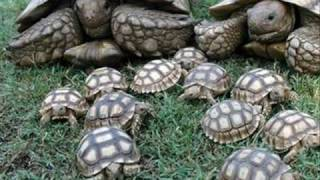 turtles and tortoise pictures