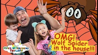 Piper N Hayden | OMG! Wolf Spider in the House!!!