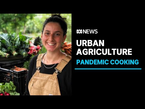City farming on rise as COVID-19 makes people rethink how they source their food | ABC News