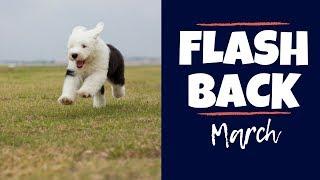 March FlashBack┃BTS with Old English Sheepdog┃Ed&Mel