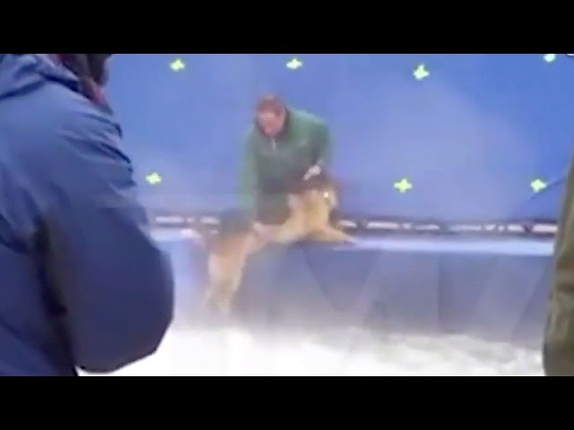 "Animal Abuse On ""A Dog's Purpose"" Set? (VIDEO)"