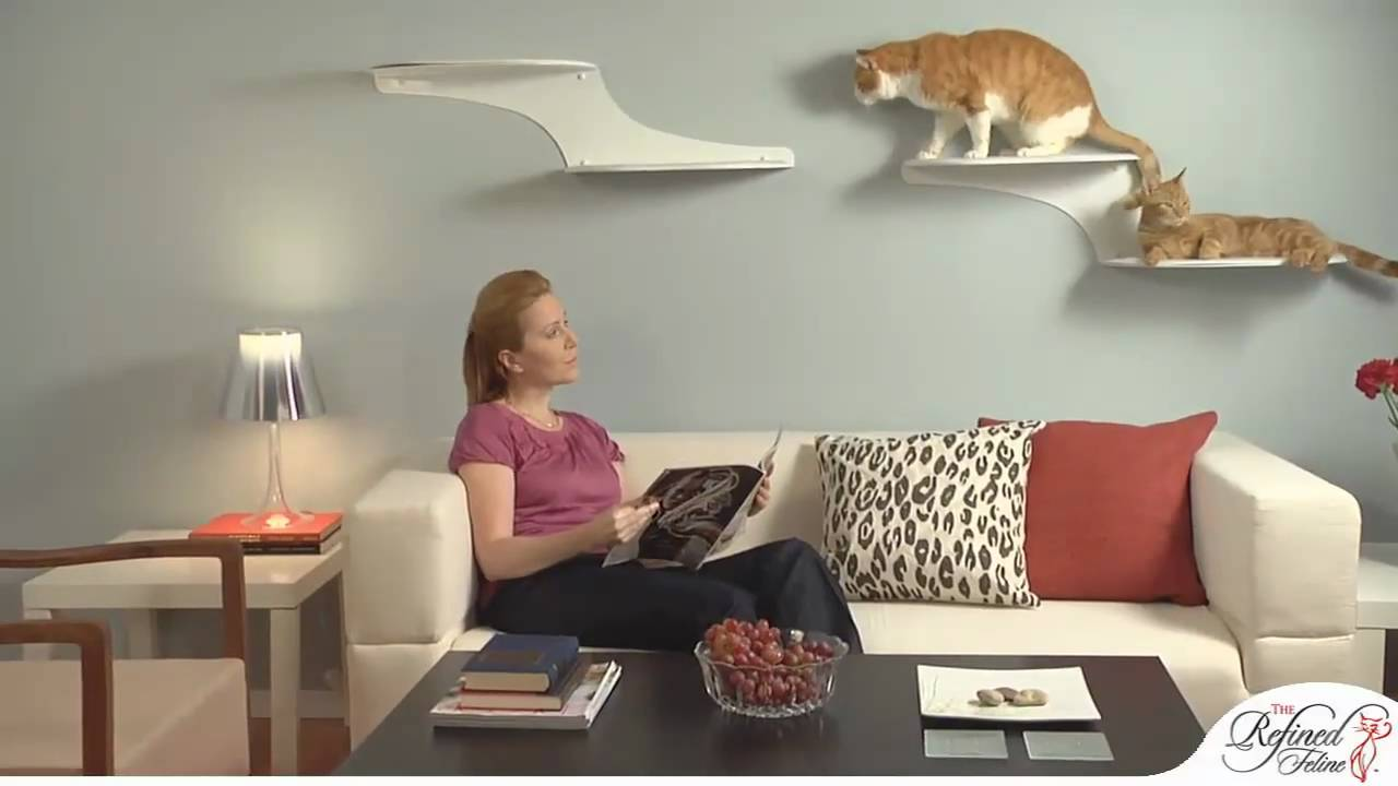 cat cloud shelf