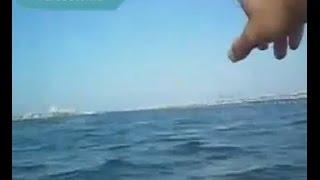 Белые акулы теперь и в Испании(Всё чаще акулы стали появляться там, где их никогда раньше не было. Теперь белые акулы в Испании., 2014-09-06T07:23:05.000Z)